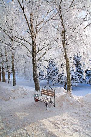 winter garden: bench in winter garden