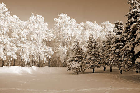 tree in snow. sepia photo
