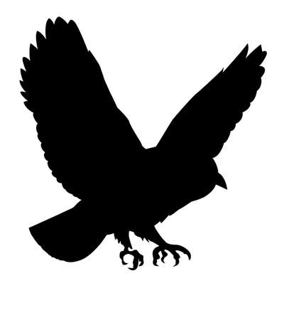 silhouette of the ravenous bird on white background Vector