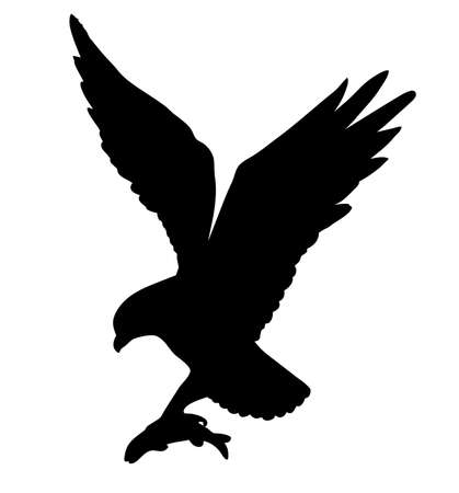 drawing of the ravenous bird on white background Vector
