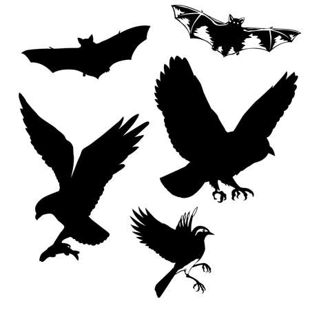 beak vulture:   illustration of the birds and bats on white background Illustration
