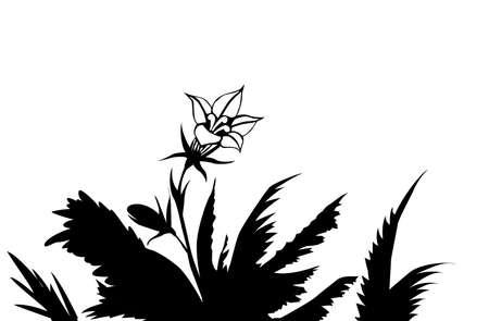 silhouette of the flower amongst herbs Vector