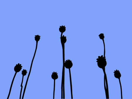 silhouette poppy on  blue background                             Stock Vector - 7735187