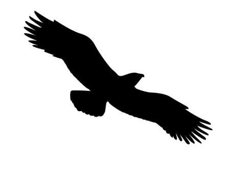 hawks:  silhouette of the ravenous bird on white background