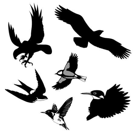 tomtit:   illustration of the birds on white background