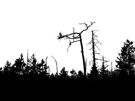 perish:   silhouette old wood