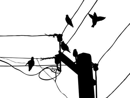 silhouette birds to waxwings on wire Stock Vector - 7735203