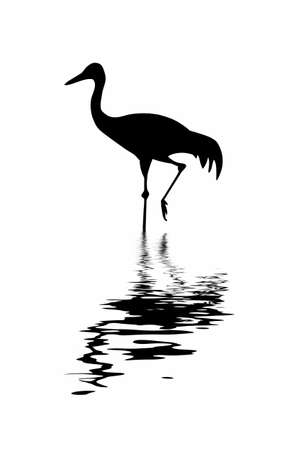 black bird: silhouette of the crane amongst water