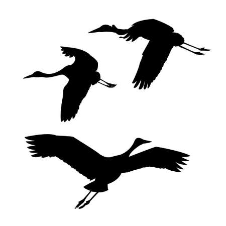 silhouette flying cranes on white background Vector
