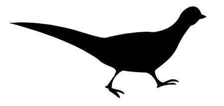 nye:  illustration of the pheasant on white background