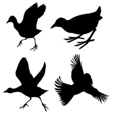 silhouette of the birds on white background Vector