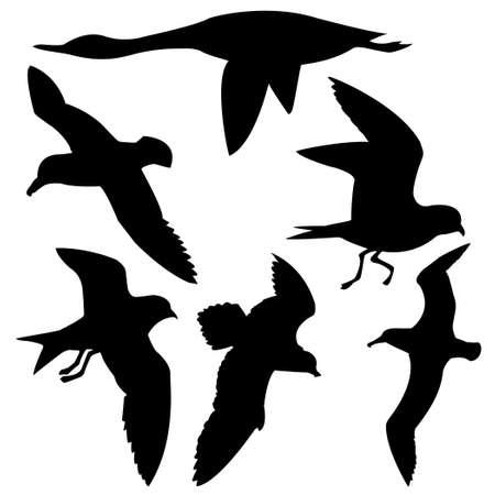 silhouette flying birds on white background Vector