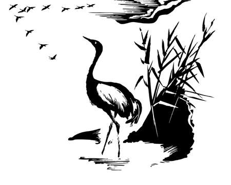 bulrush:  illustration of the crane on white background Illustration