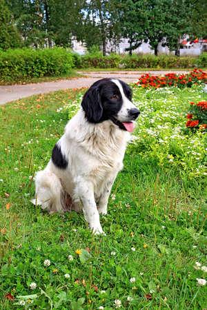 dog on herb photo