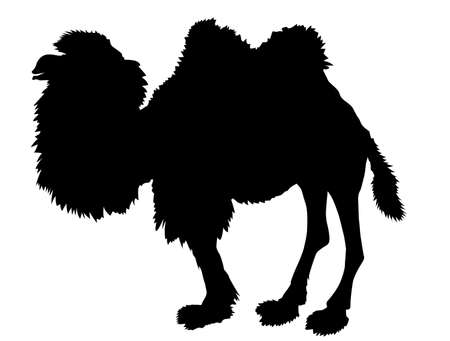 silhouette of the camel on white background Vector