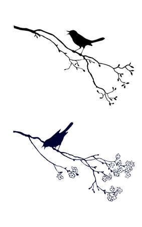 tomtit: silhouette of the bird on branch tree