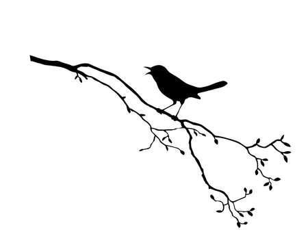 aves caricatura: silueta del ave en la rama de �rbol  Vectores