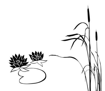 rietkraag: silhouet van de moeras planten op witte achtergrond