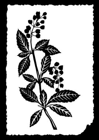 flowerses: drawing of the plant on white paper Illustration