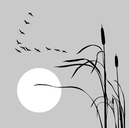 drawing flock geese on bulrush    Vector