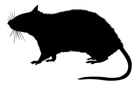 maus cartoon:  Silhouette von der Ratte auf wei�em Hintergrund  Illustration