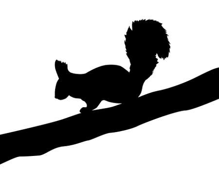 illustration of the squirrel on white background Vector