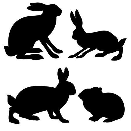 hare: liebre de siluetas y conejo sobre fondo blanco