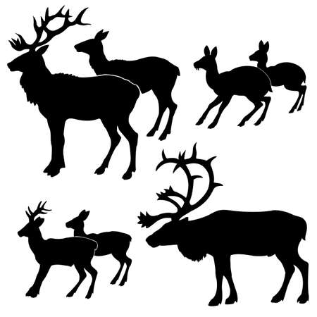 roe deer: silhouette of the deers on white background