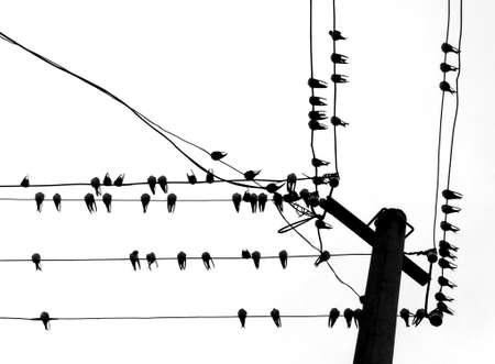silhouette swallow on wire   Vector