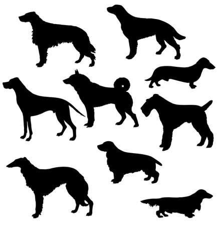 spaniel:  silhouettes of the sorts hunt dogs on white background