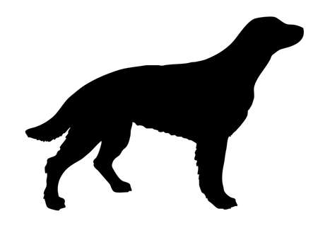 silhouette setter on white background Vector