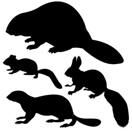 silhouette animal sur fond blanc