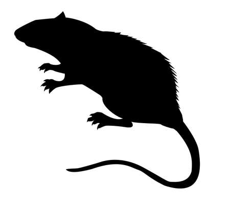 mice: silhouette of the rat on white background