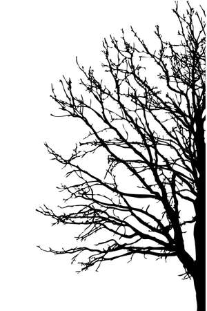 solitary tree: silhouette tree on white background