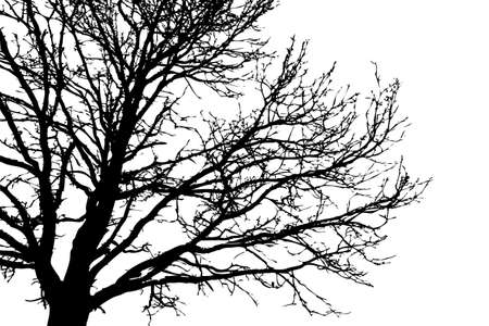silhouette tree on white background