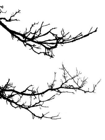 silhouette di albero del ramo su sfondo bianco