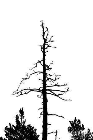 perish: old dry tree