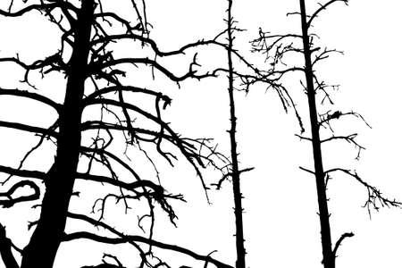 perish: silhouette dry wood