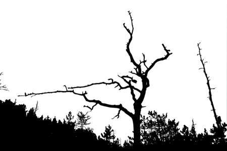 perish: silhouette dry tree on white background