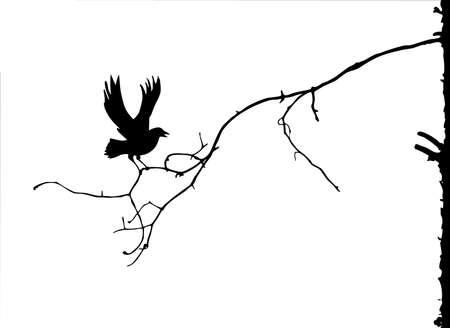 corbeau: silhouette de la branche sur fond blanc