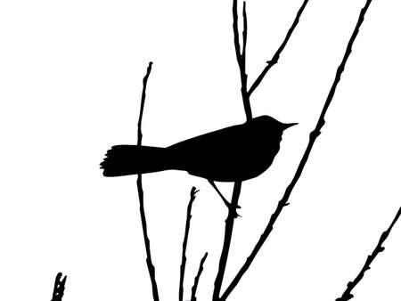 tomtit: drawing bird on branch   Illustration