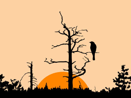 silhouette of the bird on dry tree Vector