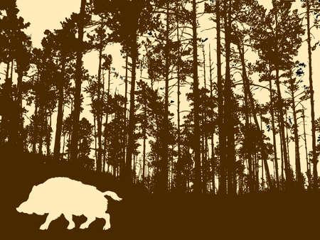 sanglier:  silhouette du sanglier dans le bois �paisse