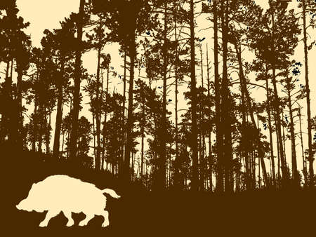 silhouette of the wild boar in thick wood     Vector