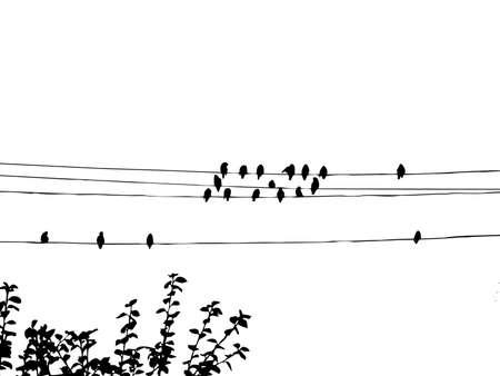 aves a los ampelis sobre cable