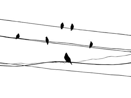 birds to waxwings on wire Stock Vector - 7780067