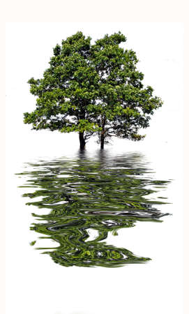 water reflection: reflection tree in water