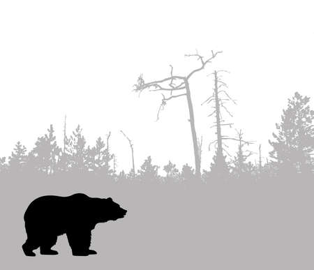 silhouette bear    photo