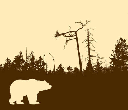 brown bear: silhouette bear