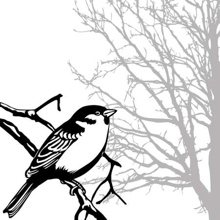 silhouette of the bird on branch photo